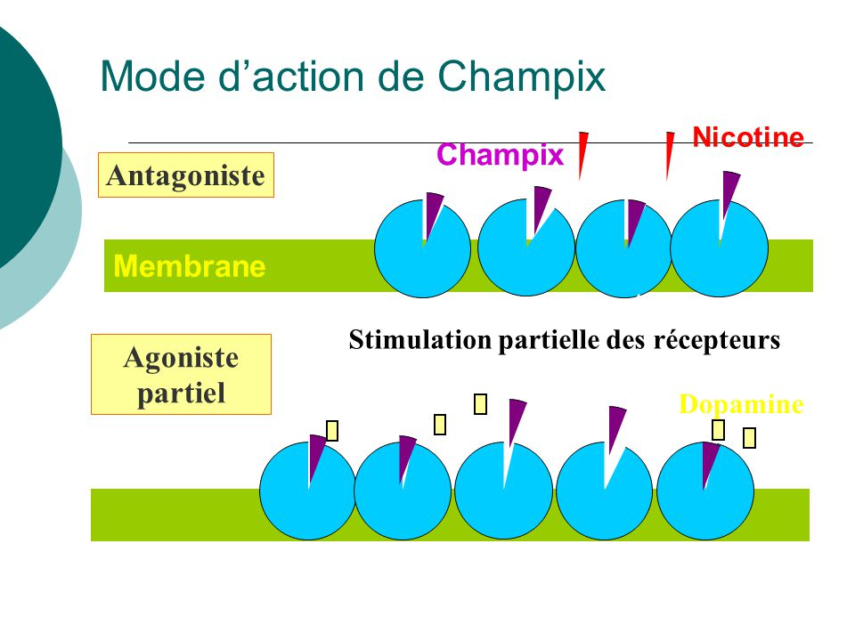 Mode d'action de Champix