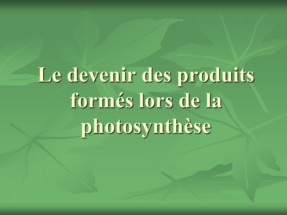 Le devenir des produits formés lors de la photosynthèse