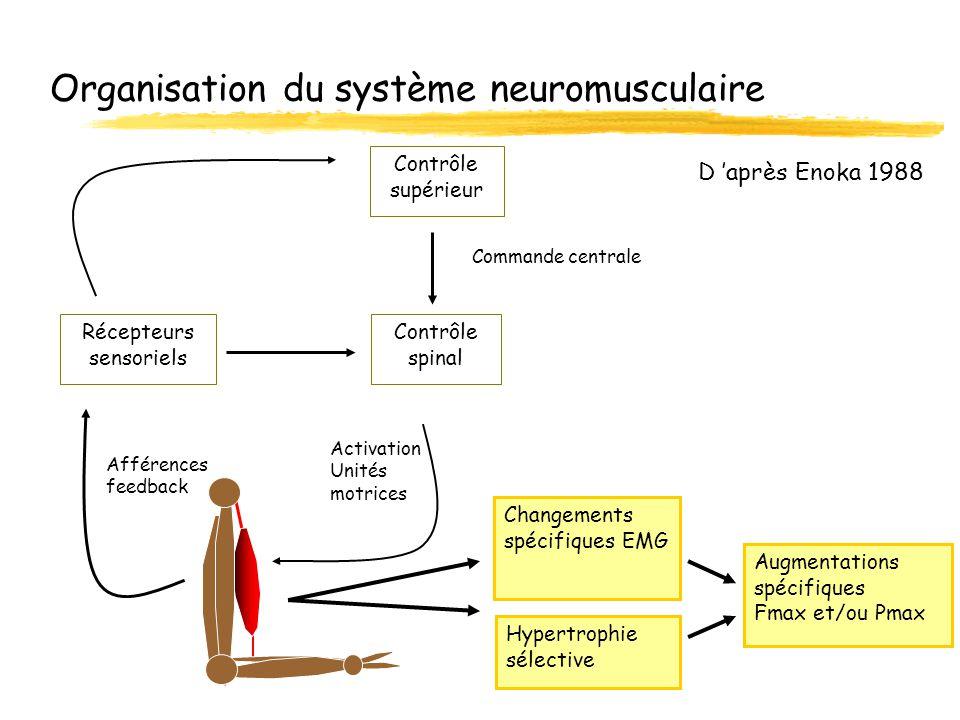 Organisation du système neuromusculaire