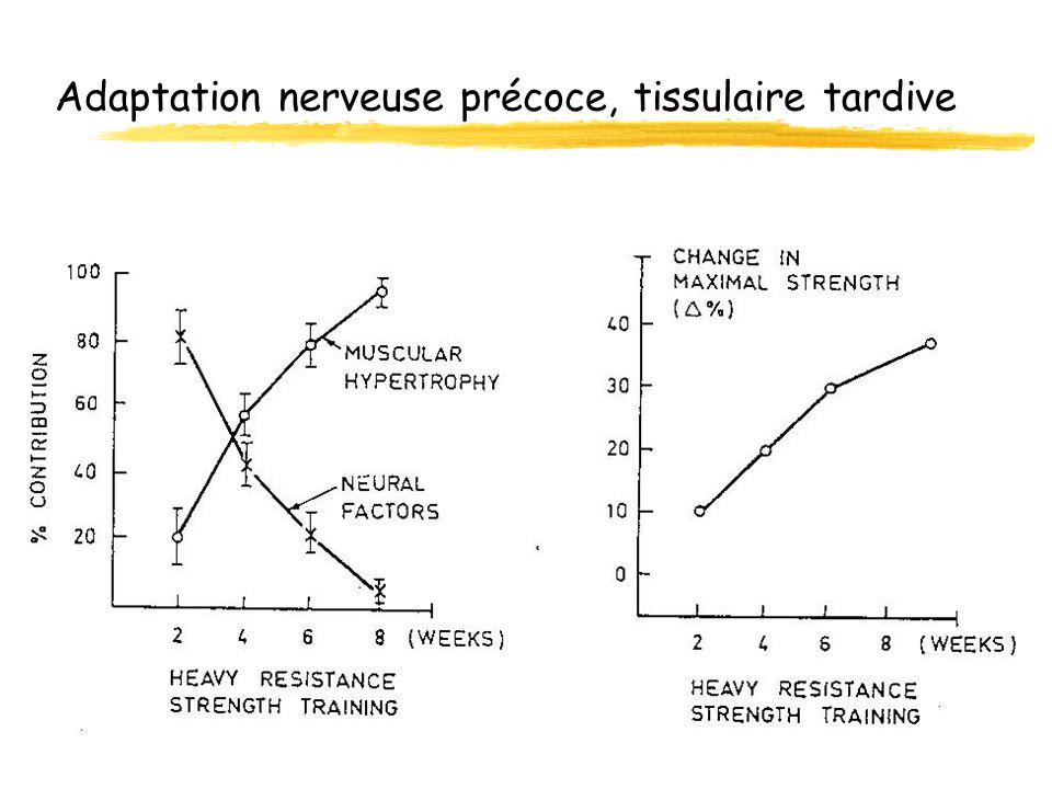 Adaptation nerveuse précoce, tissulaire tardive
