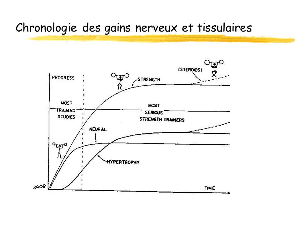 Chronologie des gains nerveux et tissulaires