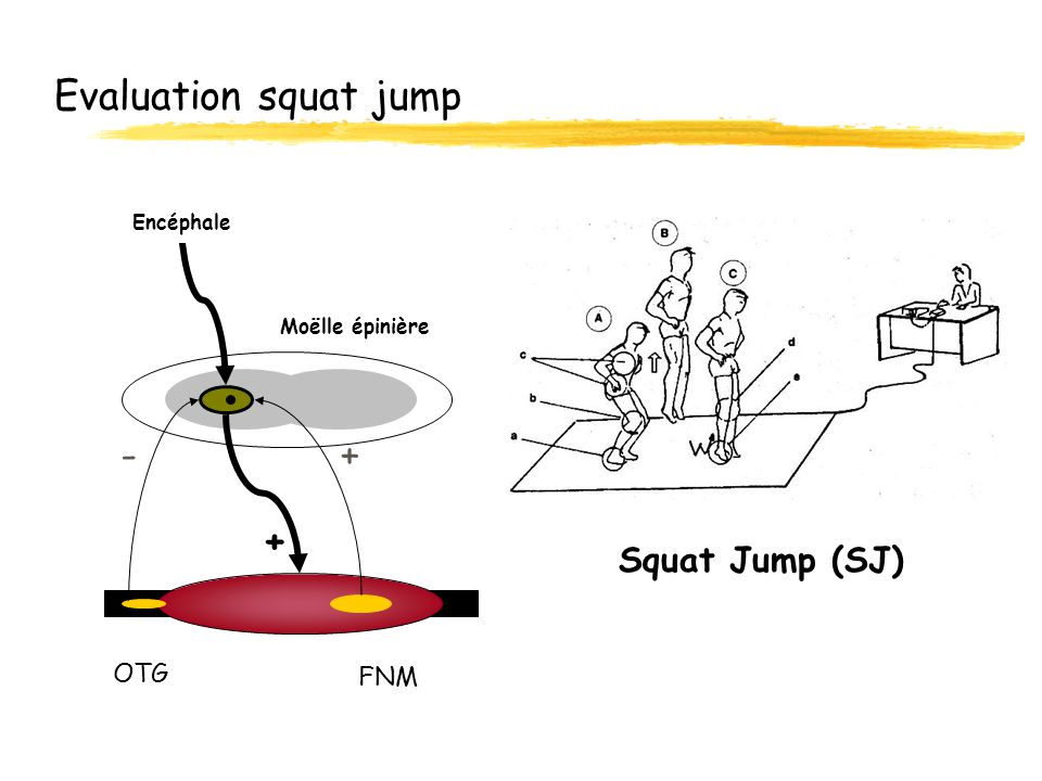 Evaluation squat jump - + + Squat Jump (SJ) OTG FNM Encéphale