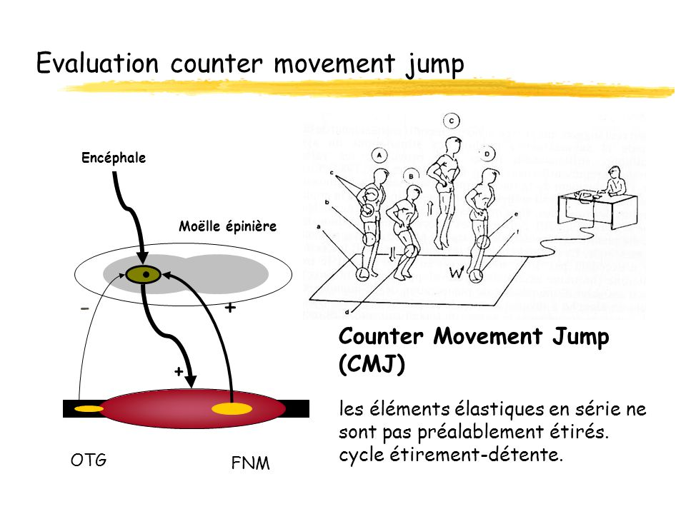 Evaluation counter movement jump
