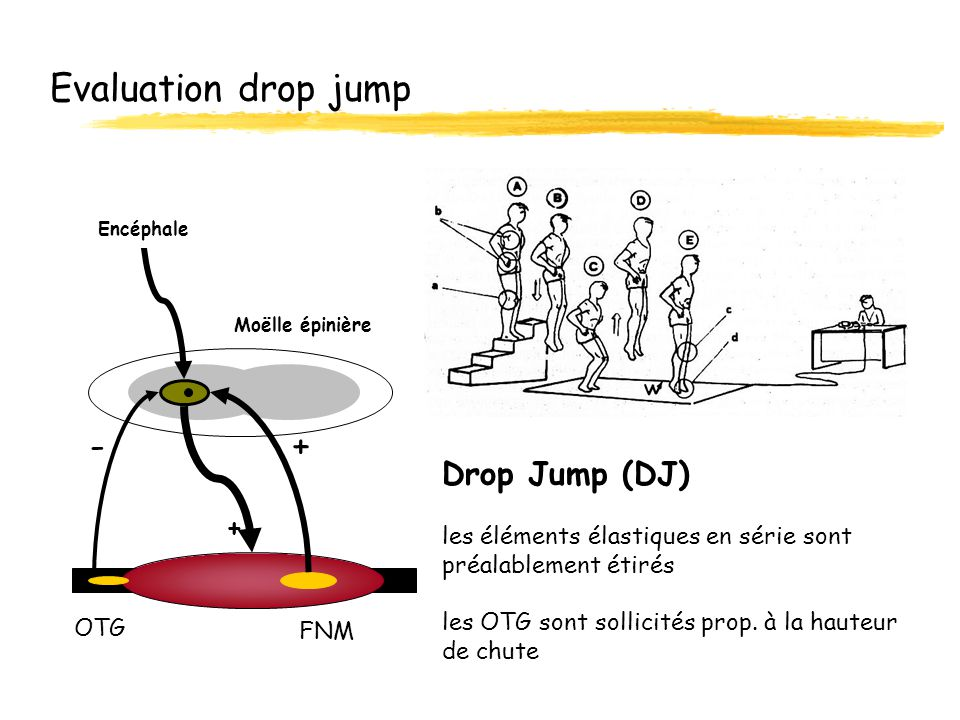 Evaluation drop jump - +
