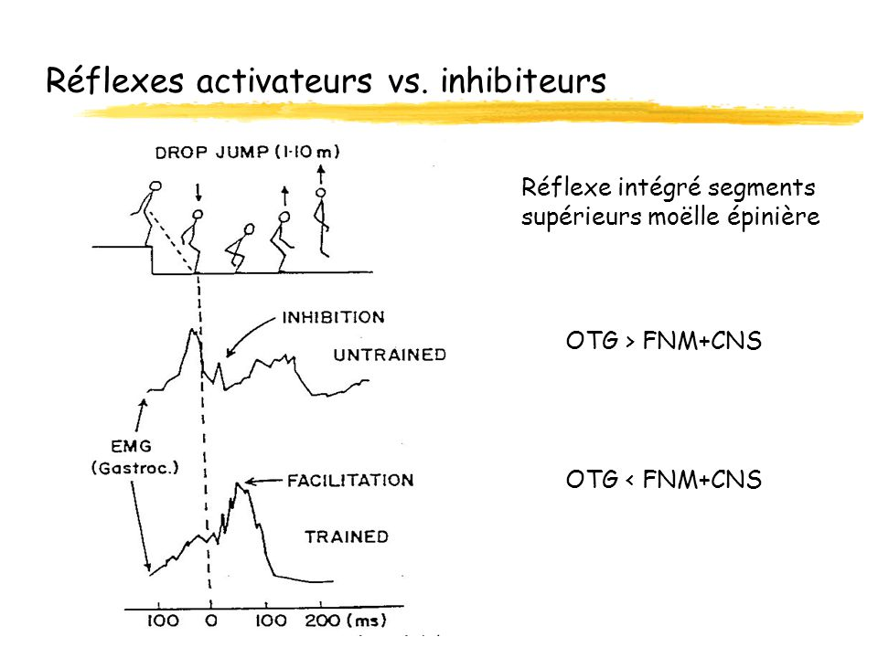 Réflexes activateurs vs. inhibiteurs