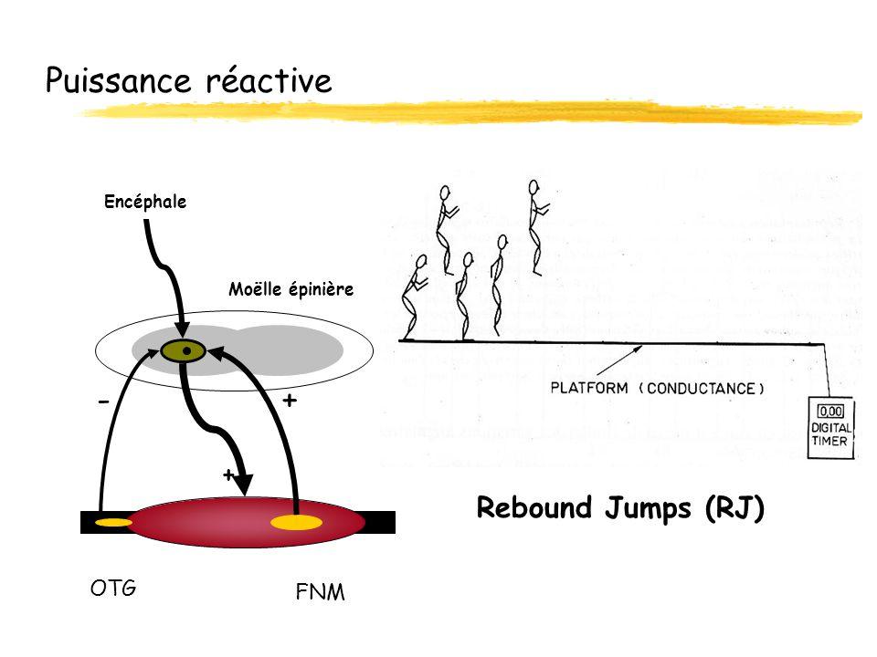 Puissance réactive - + Rebound Jumps (RJ) + OTG FNM Encéphale