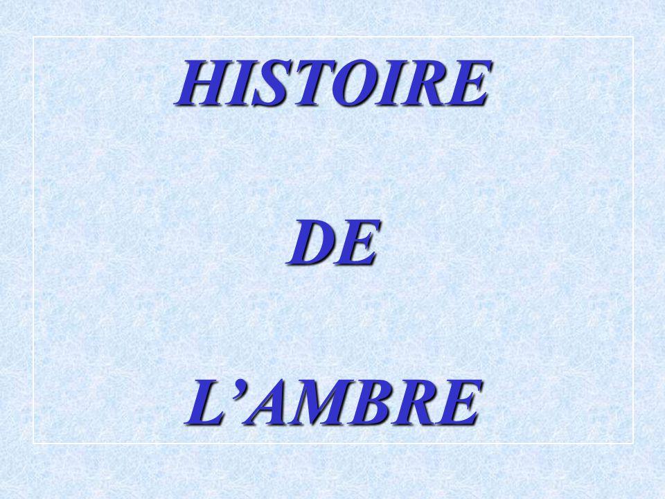 HISTOIRE DE L'AMBRE