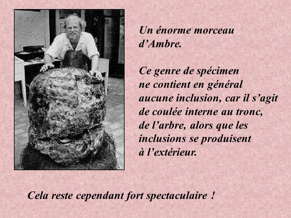 Un énorme morceau d'Ambre. Ce genre de spécimen. ne contient en général. aucune inclusion, car il s'agit.