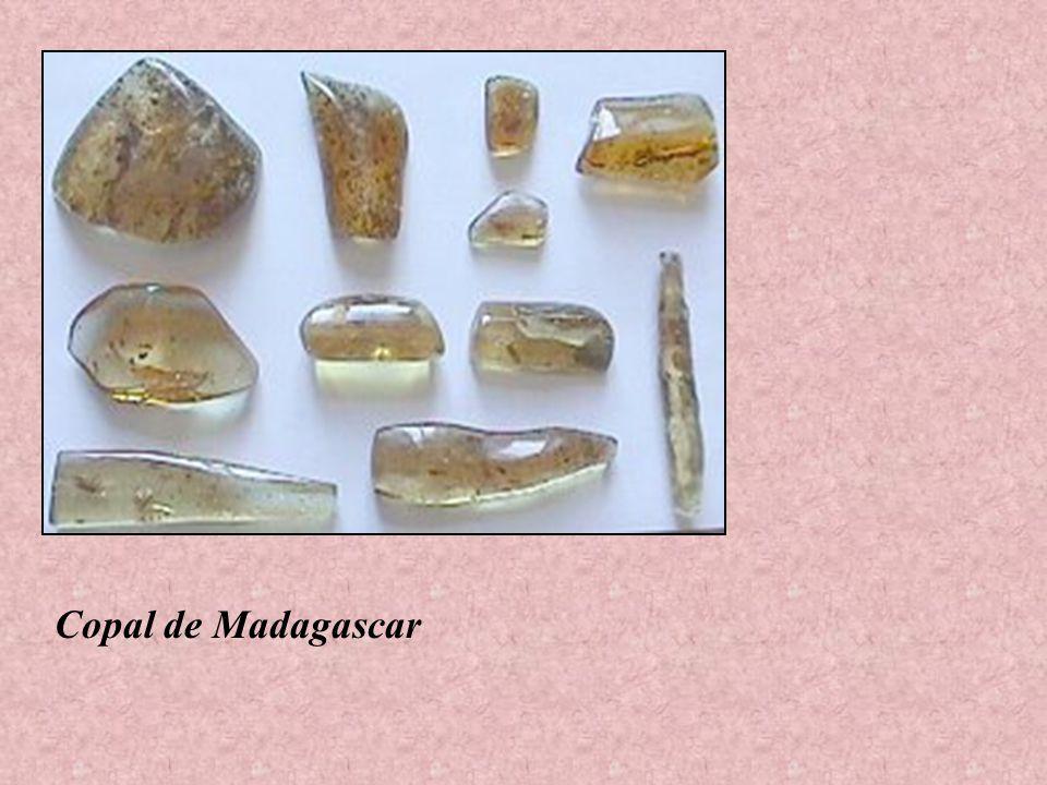 Copal de Madagascar