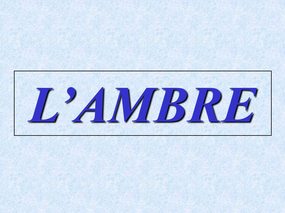 L'AMBRE