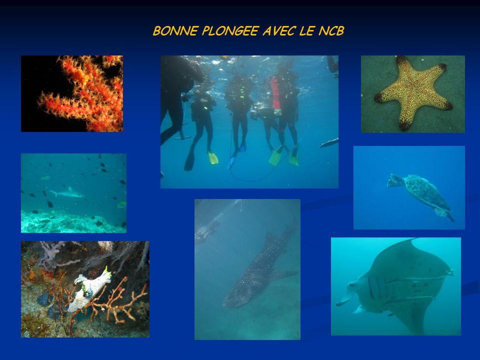 BONNE PLONGEE AVEC LE NCB