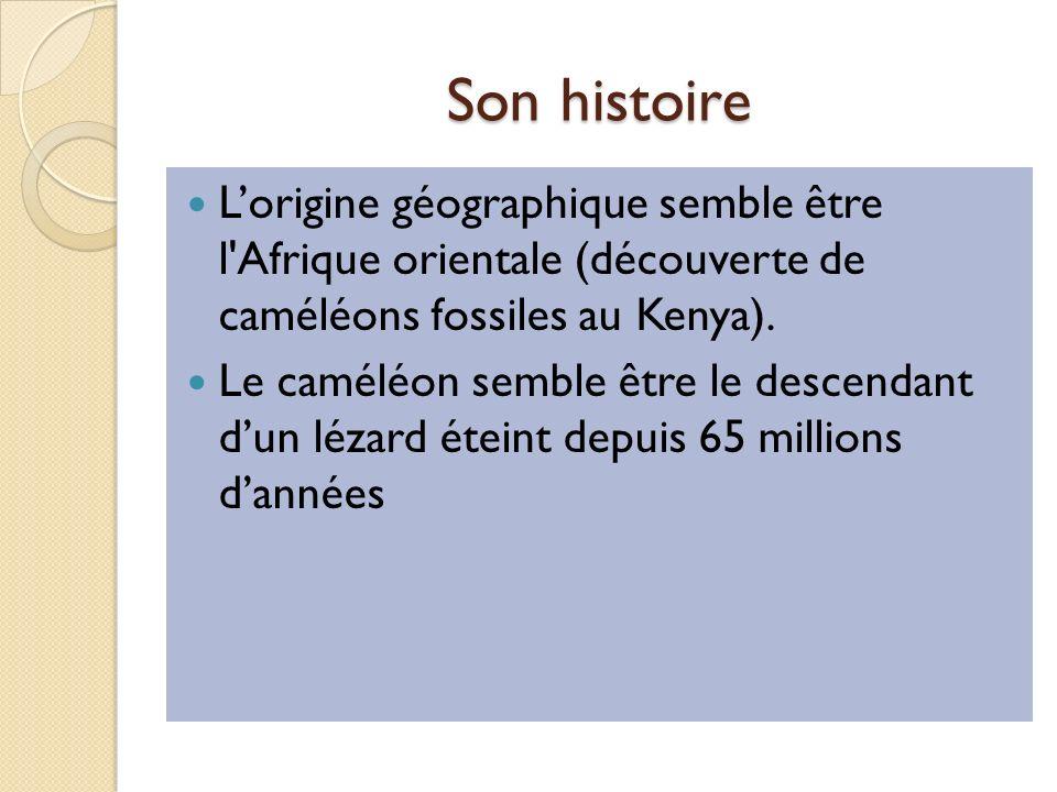 Son histoire L'origine géographique semble être l Afrique orientale (découverte de caméléons fossiles au Kenya).