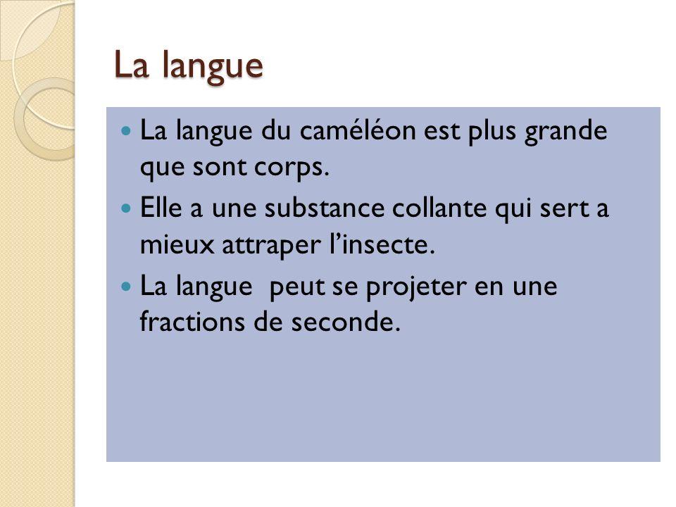 La langue La langue du caméléon est plus grande que sont corps.