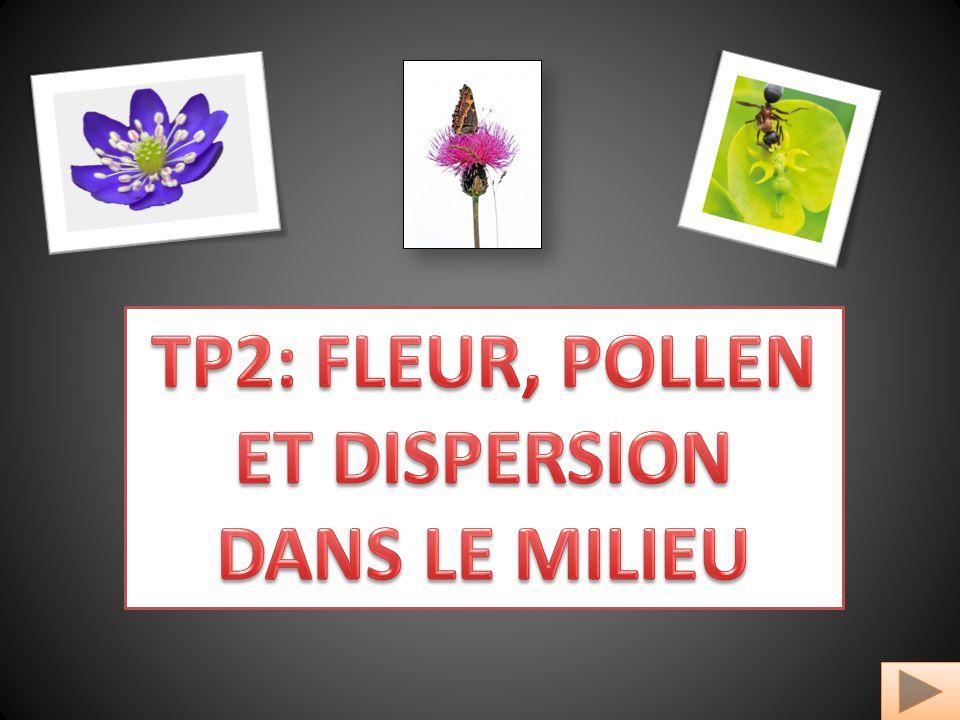 TP2: FLEUR, POLLEN ET DISPERSION DANS LE MILIEU