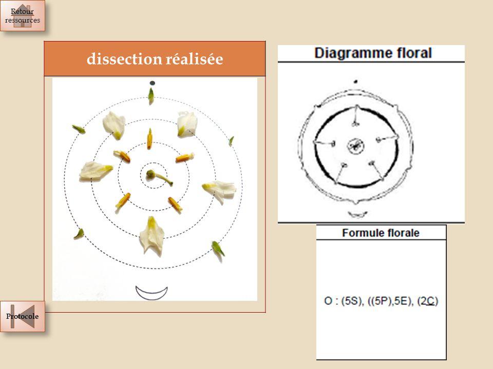 Retour ressources dissection réalisée Protocole