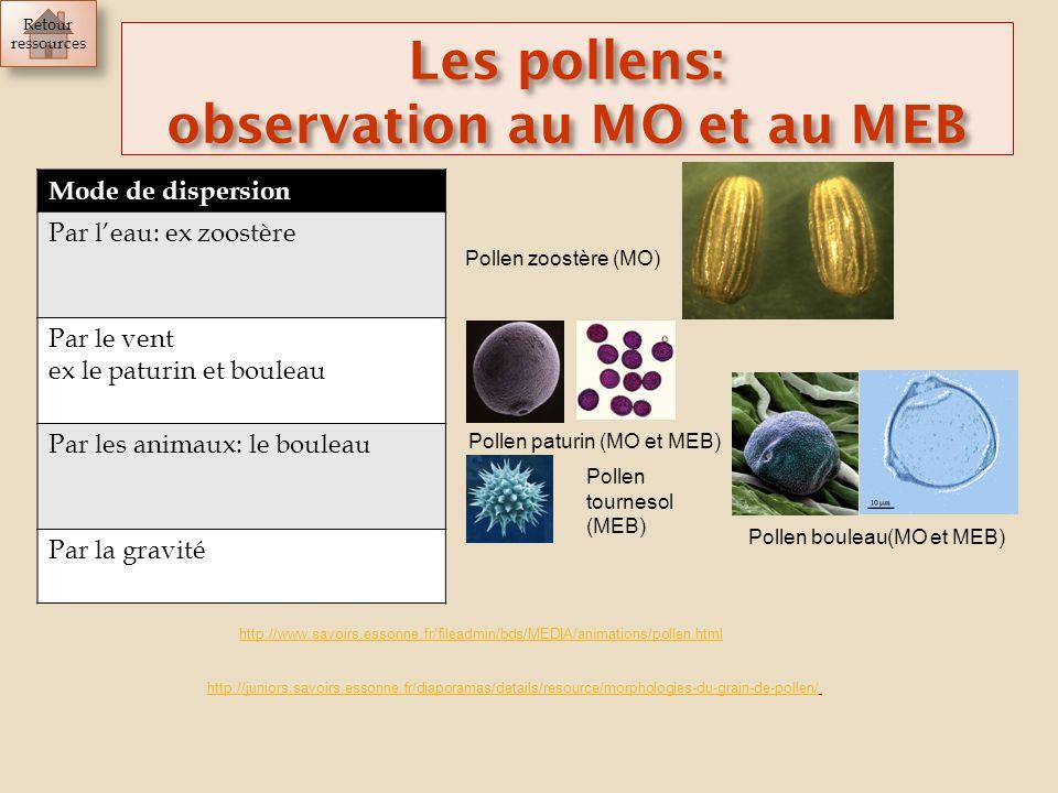 observation au MO et au MEB