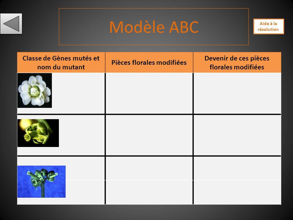 Modèle ABC Classe de Gènes mutés et nom du mutant
