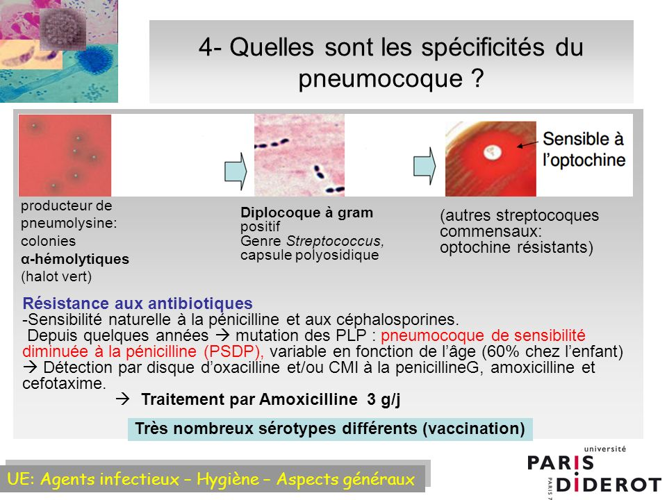 4- Quelles sont les spécificités du pneumocoque