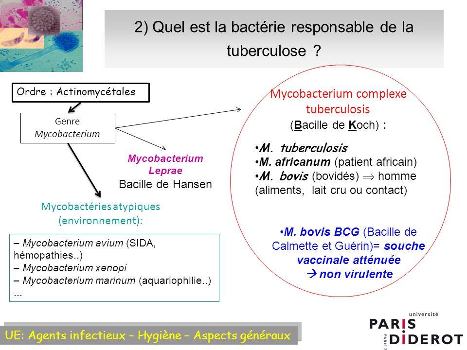 2) Quel est la bactérie responsable de la tuberculose