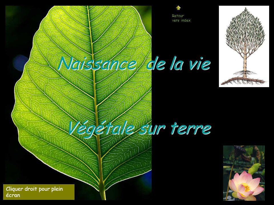 Naissance de la vie Végétale sur terre Cliquer droit pour plein écran