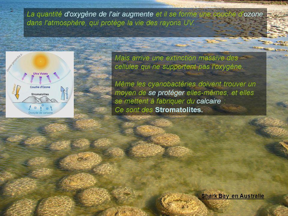 Ce sont des Stromatolites.