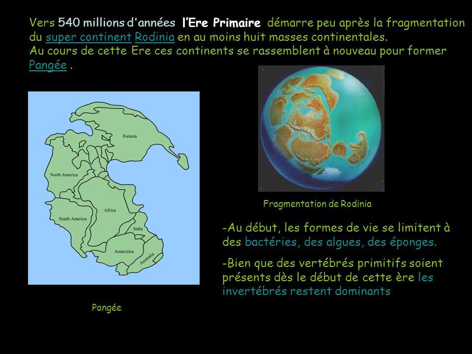 Vers 540 millions d années l'Ere Primaire démarre peu après la fragmentation du super continent Rodinia en au moins huit masses continentales. Au cours de cette Ere ces continents se rassemblent à nouveau pour former Pangée .