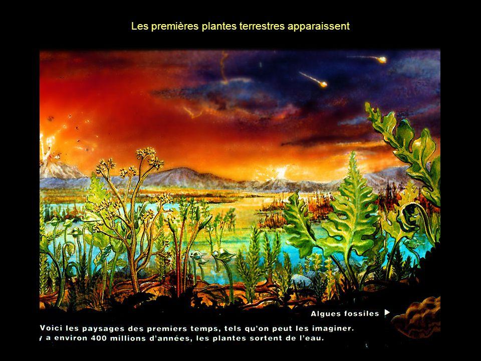 Les premières plantes terrestres apparaissent