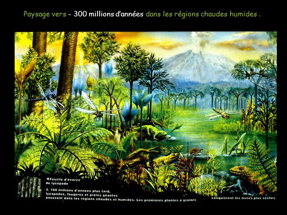 Paysage vers - 300 millions d'années dans les régions chaudes humides .