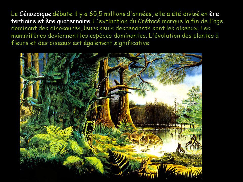 Le Cénozoïque est l ère géologique actuelle