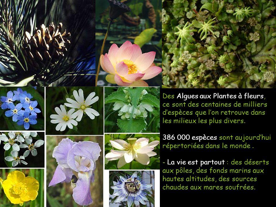 Des Algues aux Plantes à fleurs, ce sont des centaines de milliers d'espèces que l'on retrouve dans les milieux les plus divers.