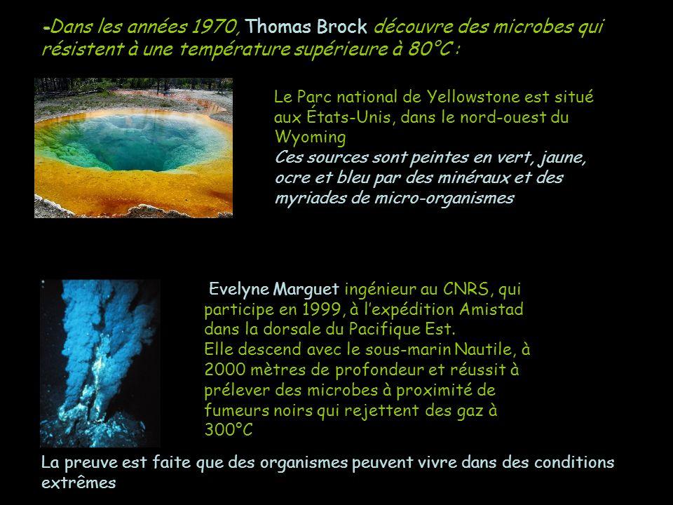-Dans les années 1970, Thomas Brock découvre des microbes qui résistent à une température supérieure à 80°C :