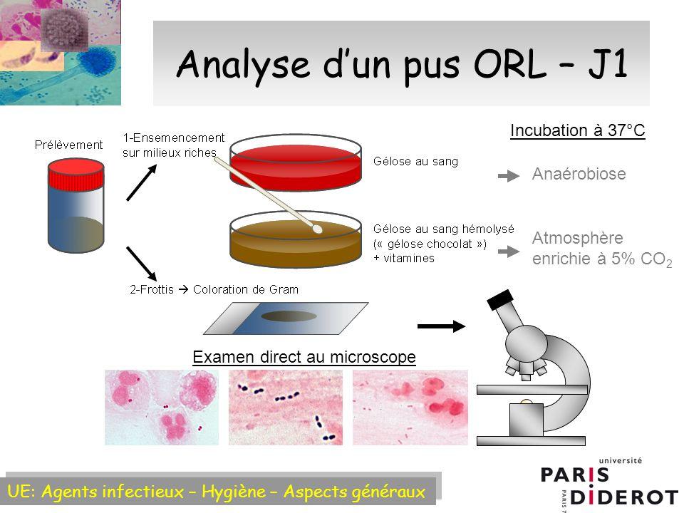 Analyse d'un pus ORL – J1 Incubation à 37°C Anaérobiose