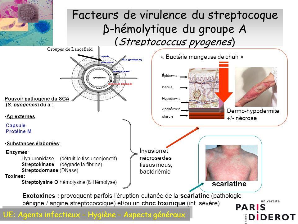 Facteurs de virulence du streptocoque β-hémolytique du groupe A (Streptococcus pyogenes)