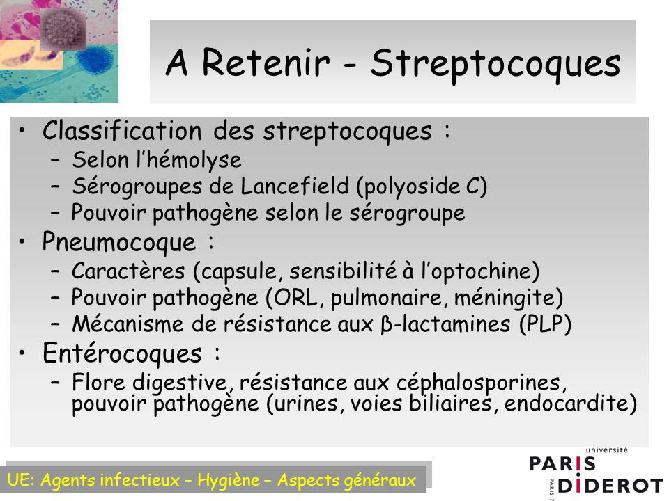 A Retenir - Streptocoques