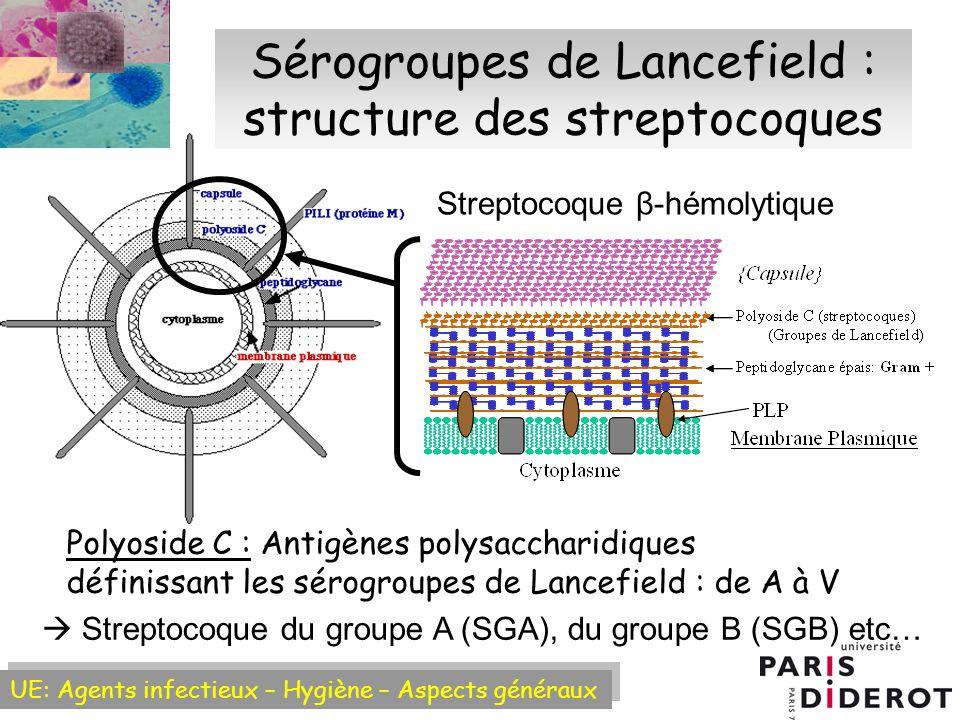 Sérogroupes de Lancefield : structure des streptocoques