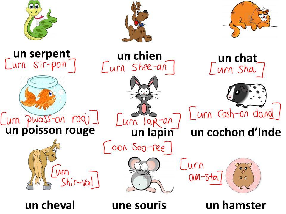 un serpent un chien. un chat. un poisson rouge. un lapin. un cochon d'Inde. un cheval. une souris.
