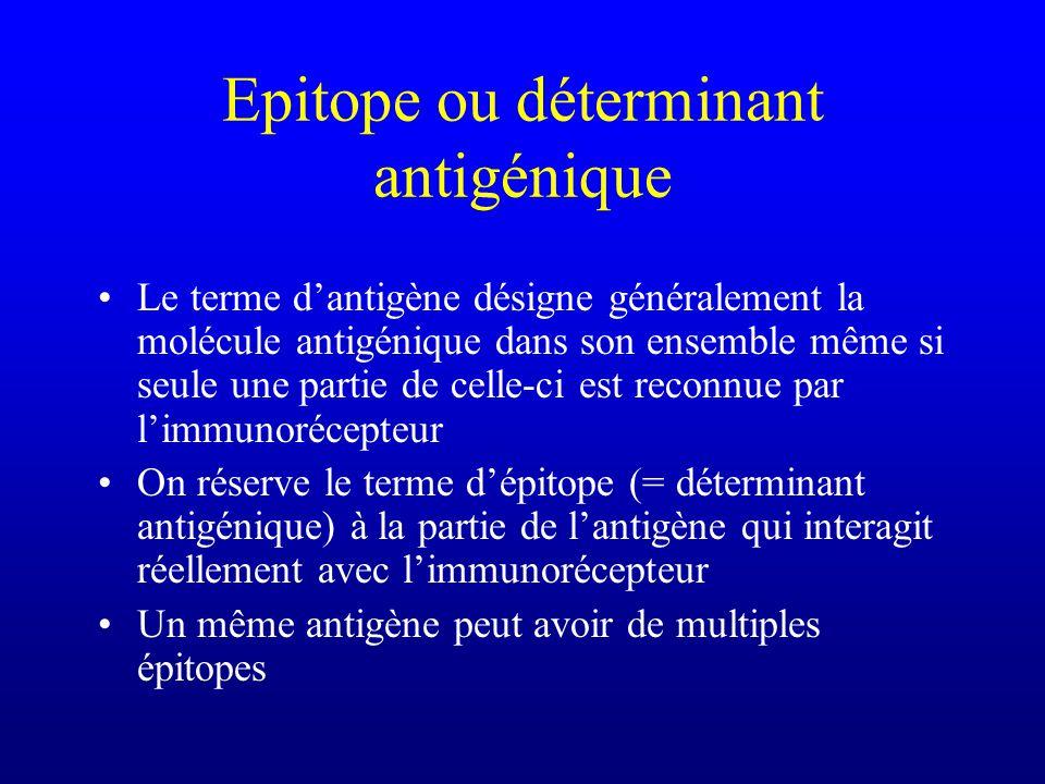 Epitope ou déterminant antigénique