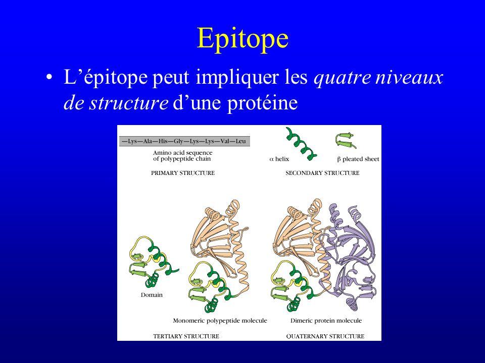 Epitope L'épitope peut impliquer les quatre niveaux de structure d'une protéine