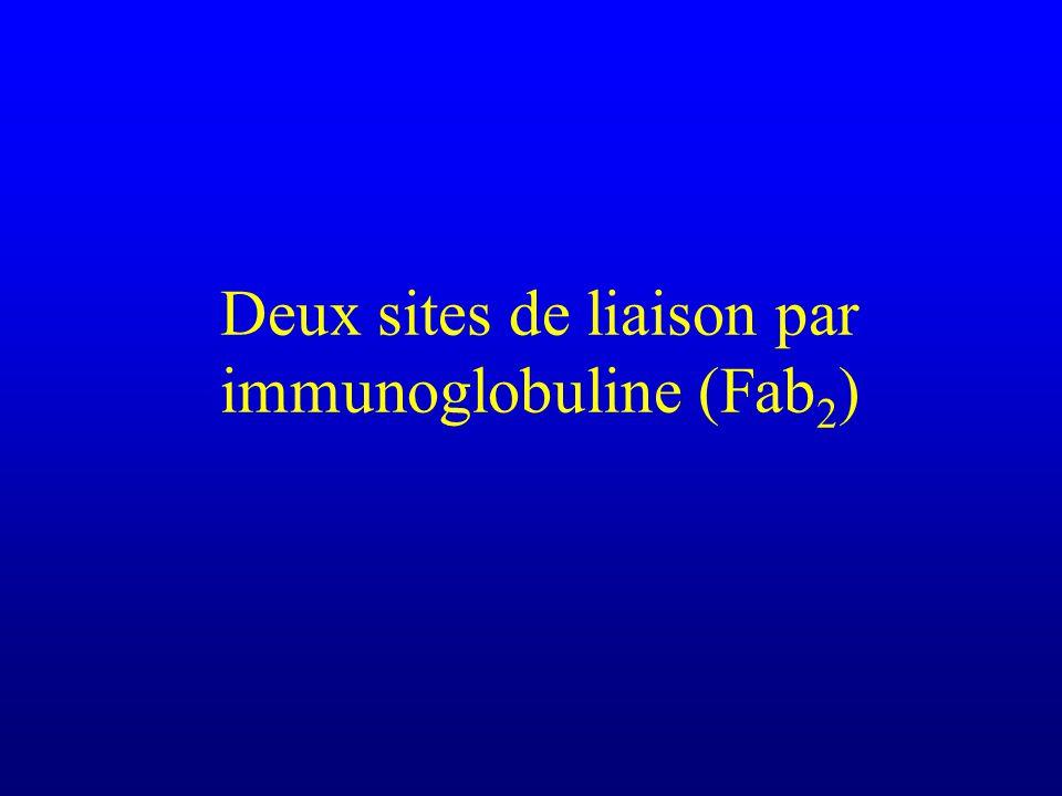 Deux sites de liaison par immunoglobuline (Fab2)