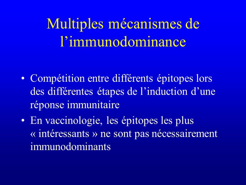 Multiples mécanismes de l'immunodominance