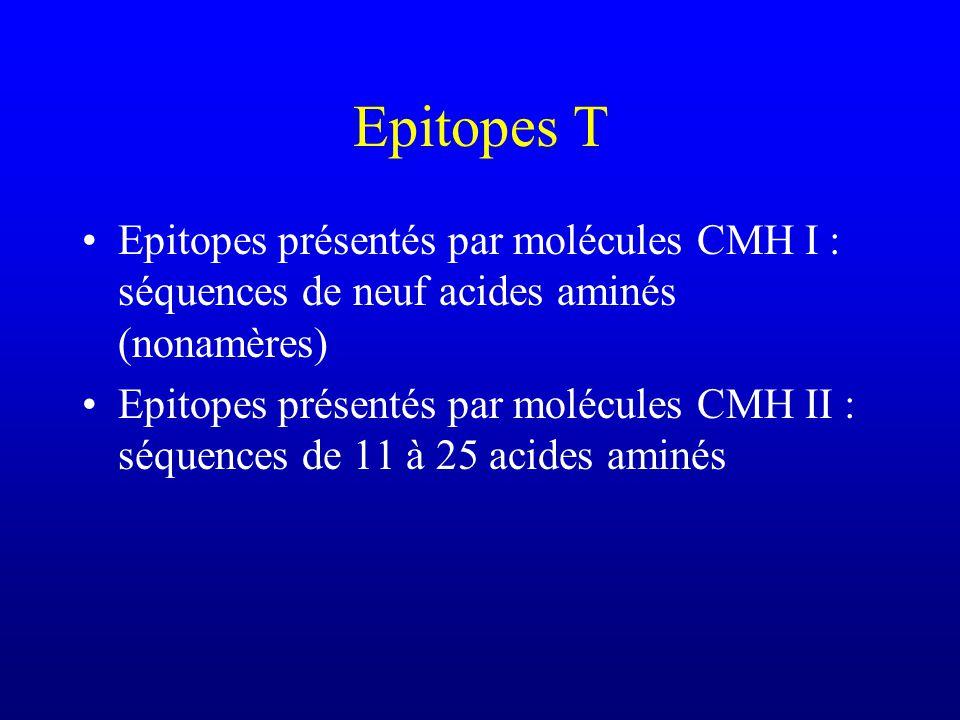 Epitopes T Epitopes présentés par molécules CMH I : séquences de neuf acides aminés (nonamères)