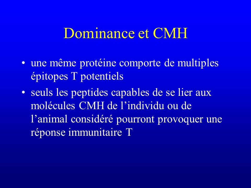 Dominance et CMH une même protéine comporte de multiples épitopes T potentiels.