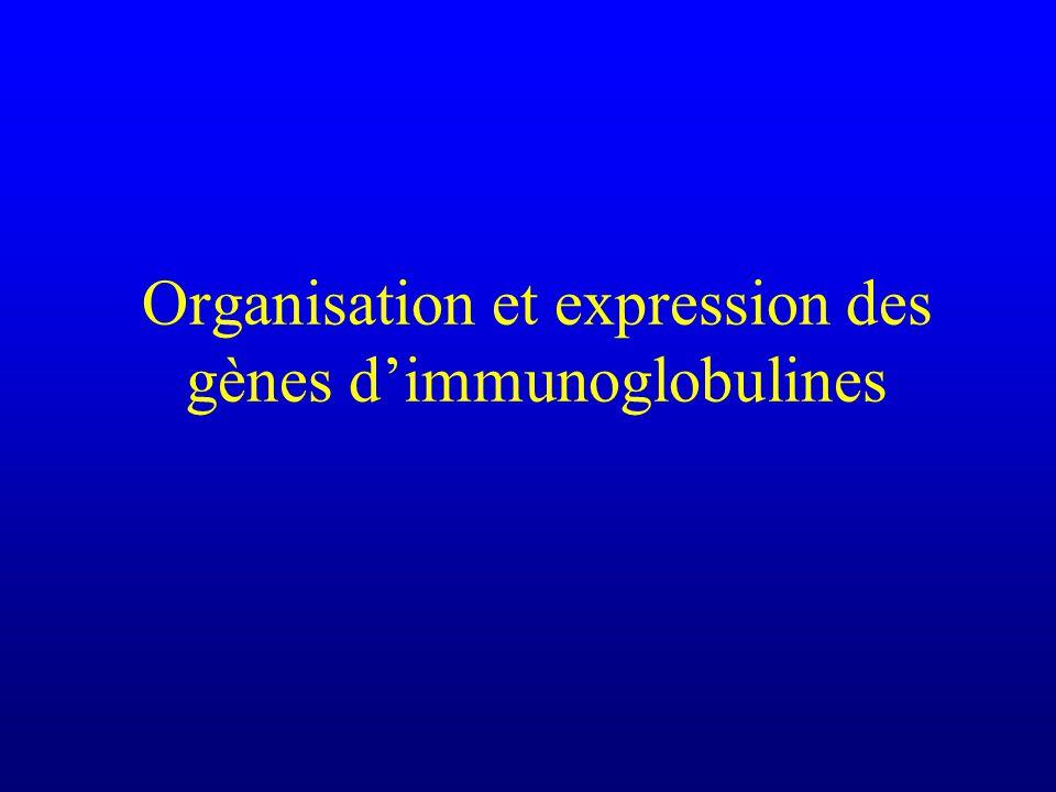 Organisation et expression des gènes d'immunoglobulines