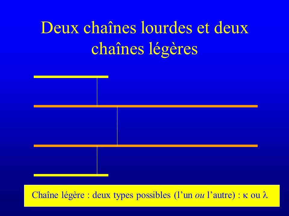 Deux chaînes lourdes et deux chaînes légères