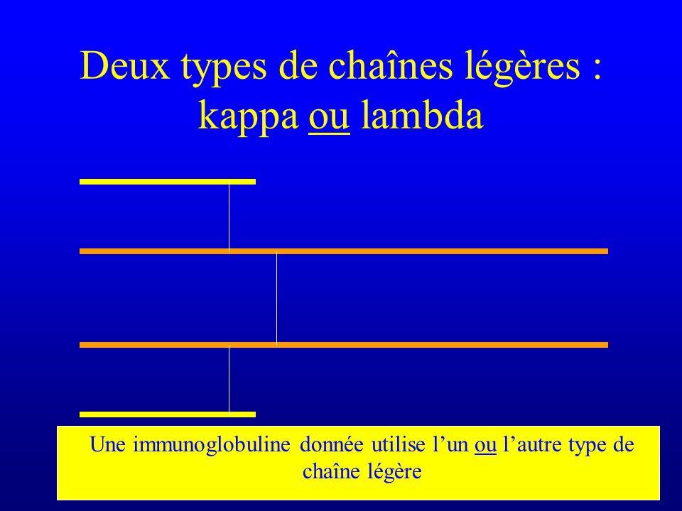 Deux types de chaînes légères : kappa ou lambda