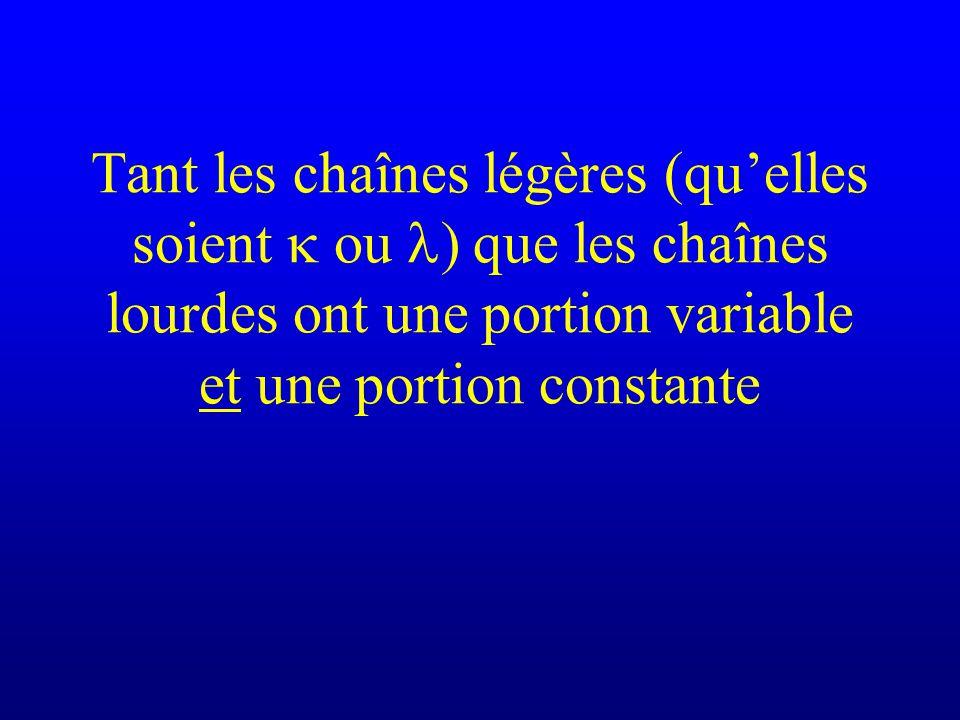 Tant les chaînes légères (qu'elles soient k ou l) que les chaînes lourdes ont une portion variable et une portion constante