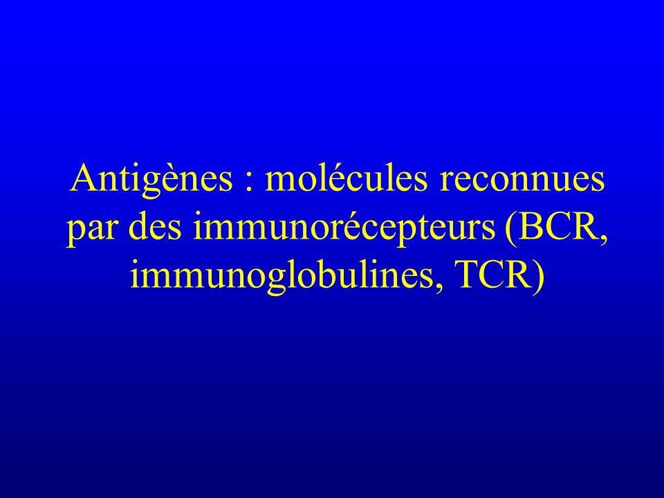 Antigènes : molécules reconnues par des immunorécepteurs (BCR, immunoglobulines, TCR)