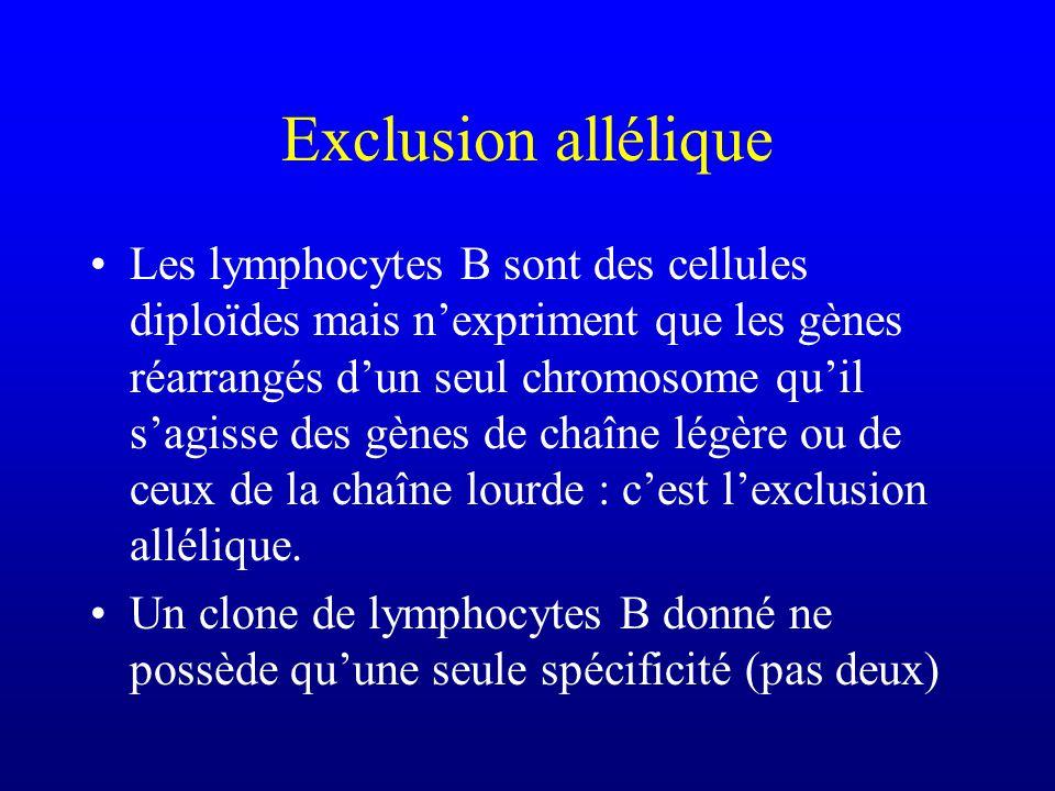 Exclusion allélique