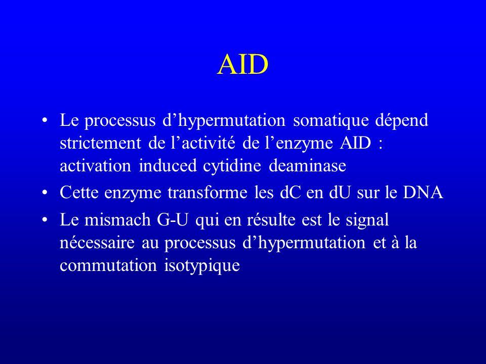 AID Le processus d'hypermutation somatique dépend strictement de l'activité de l'enzyme AID : activation induced cytidine deaminase.