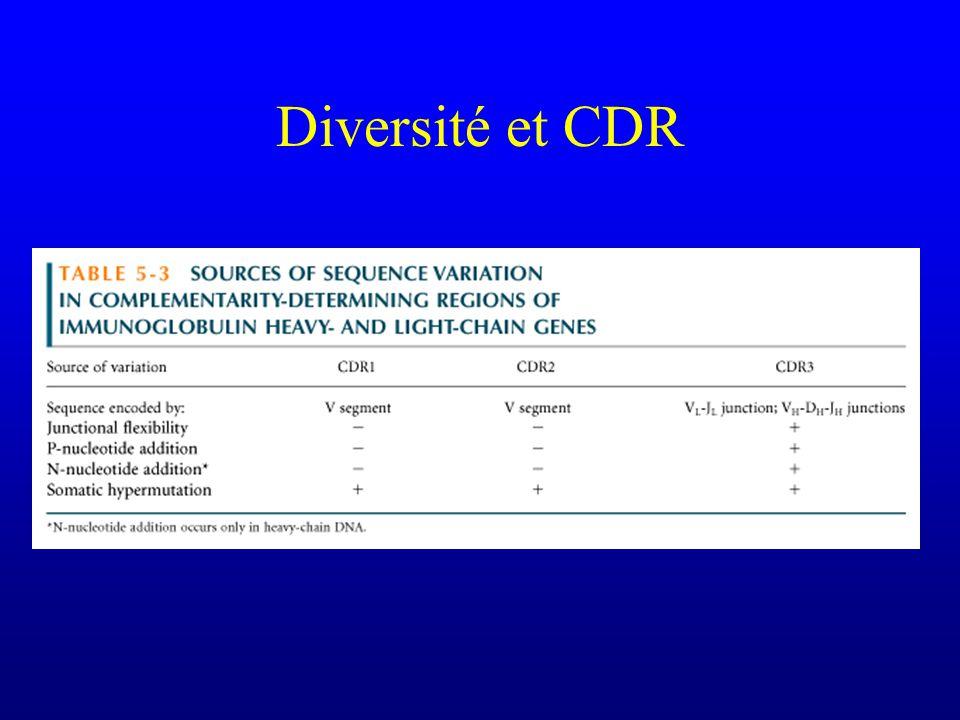 Diversité et CDR